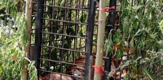 Harimau Teror Warga Masuk Perangkap BKSDA