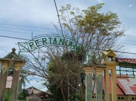 Dongkrak Sektor Ekonomi, Dinas Pertanian Aceh Singkil Ajak Kaum Milenial Bertani