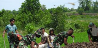 Pembangunan Badan Jalan 750 M, Program TMMD Desa Sukorahayu di Apresiasi Warga Desa