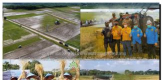Produksi Gabah Kering Giling Meningkat 5,3 Ton Per Hektar Tahun 2020, GKG OKI Naik Peringkat 2 Sumsel