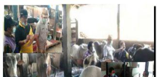 Pastikan Stok Daging dan Sapi Kurban Asuh Jelang Idul Fitri, Disbunak OKI Lakukan Pemantauan dan Pemeriksaan Hewan