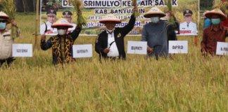 Askolani Bersama DPRD Banyuasin Panen Raya Padi IP 200 di Desa Sri Mulyo