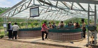 """Inovasi Budidaya Ikan Lele """"Bioflok"""" Tingkatkan Penghasilan dan Perekonomian Masyarakat Desa"""