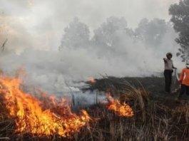 Ditemukan 76 Titik Api di OKI, 2 hektare Lahan Terbakar di Sisi Jalan Tol Palindra Km 15 OI